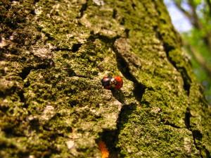 Lieveheersbeestjes-social-media-relaties